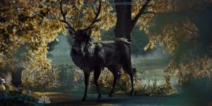 Hannibal_El ciervo