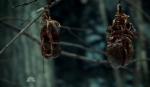Hannibal_Organos colgantes